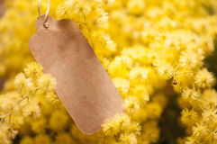 Fleurs 8 mars de carte postale et de mimosa Image stock