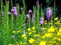 Fleurs, Melbourne Photo libre de droits