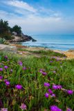 Fleurs menant à la mer Photo libre de droits