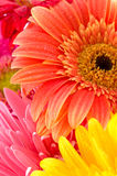 Fleurs merveilleuses Photographie stock