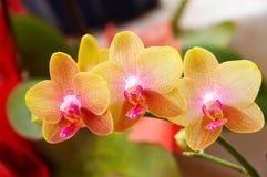 Fleurs mignonnes images libres de droits