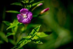 Fleurs mignonnes sur un pré mystérieux Photos libres de droits