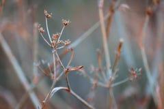Fleurs minces Photographie stock libre de droits