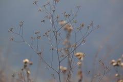 Fleurs minces d'automne dans un pré Le fond est brumeux Photos libres de droits