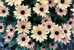 Fleurs miniatures de Sun Photos stock