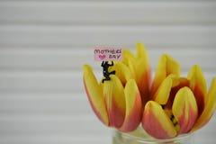 Fleurs miniatures de tulipe de printemps de connexion de jour de mères Photos stock