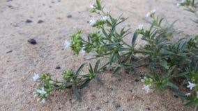Fleurs minuscules photographie stock libre de droits