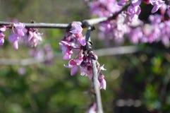 Fleurs minuscules sur une branche photo libre de droits