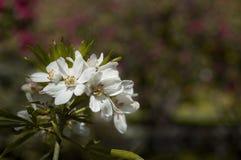 Fleurs mises en lumière Photographie stock libre de droits