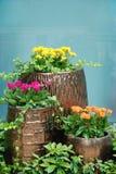 Fleurs mises en pot Photographie stock libre de droits