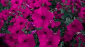 Fleurs mises en pot Images libres de droits