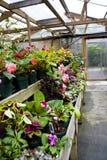 Fleurs mises en pot en serre chaude Photographie stock libre de droits