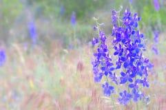 Fleurs molles Photographie stock