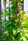 Fleurs montant la porte Photographie stock libre de droits