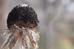 Fleurs mortes photos libres de droits