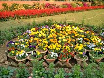 Fleurs multi photos stock