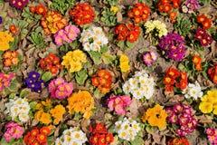Fleurs multicolores Photo libre de droits