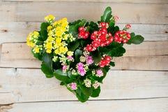 Fleurs multicolores jaunes, Kalanchoe rouge et rose sur un fond en bois dans le pot de fleur photos libres de droits