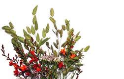 Fleurs multicolores sur un fond blanc images stock