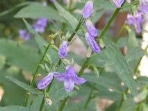Fleurs, nature, beauté, été, amende Images libres de droits