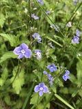 Fleurs, nature, violette, pourpre, au foyer, fleurs, nature, violette, pourpre, au foyer photo stock