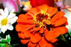 Fleurs naturelles - sentiments sincères Amour - en tant que lui IS-IS toujours beau Image libre de droits