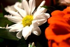 Fleurs naturelles - sentiments sincères Amour - en tant que lui IS-IS toujours beau Photo libre de droits