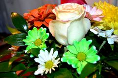 Fleurs naturelles - sentiments sincères Amour - en tant que lui IS-IS toujours beau Image stock