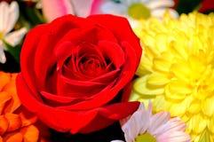 Fleurs naturelles - sentiments sincères Amour - en tant que lui IS-IS toujours beau Photographie stock libre de droits