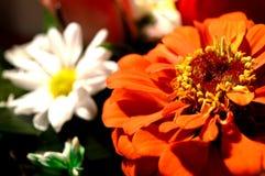 Fleurs naturelles - sentiments sincères Amour - en tant que lui IS-IS toujours beau Images stock