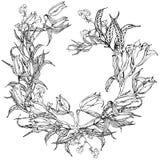 Fleurs noires et blanches florales de lis de fond de vecteur Images libres de droits