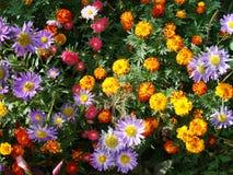Fleurs normales Photos stock