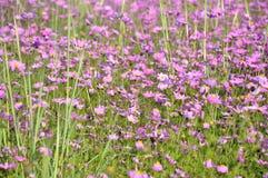 Fleurs normales Photographie stock libre de droits
