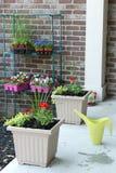 Fleurs nouvellement plantées de ressort dans des pots de fleurs Photos libres de droits