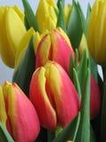 Fleurs nuptiales Photographie stock