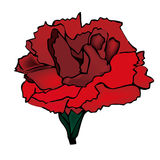 Fleurs, oeillets Illustration Libre de Droits