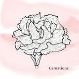 Fleurs, oeillets Illustration de Vecteur
