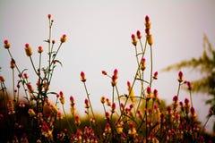 Fleurs ondulées Image libre de droits