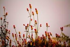 Fleurs ondulées Photos stock