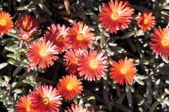 Fleurs oranges photographie stock libre de droits