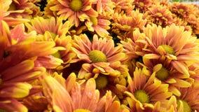 Fleurs oranges Photographie stock