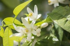 Fleurs oranges au printemps Photo stock