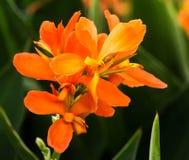 Fleurs oranges aux jardins de Longwood, PA, Etats-Unis Photographie stock