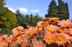 Fleurs oranges avec un coeur jaune dans les hautes montagnes, les arbres verts et le ciel bleu avec des nuages en Crimée photographie stock