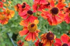 Fleurs oranges colorées photo stock