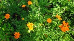 Fleurs oranges de couleur recueillies comme amis Image stock