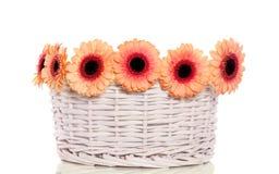 Fleurs oranges de gerber Photos libres de droits