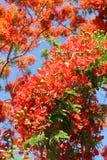 Fleurs oranges en gros plan contre le ciel bleu Image stock