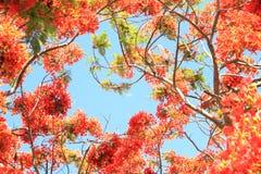 Fleurs oranges en gros plan contre le ciel bleu images stock