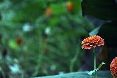 Fleurs oranges en ville Photo libre de droits